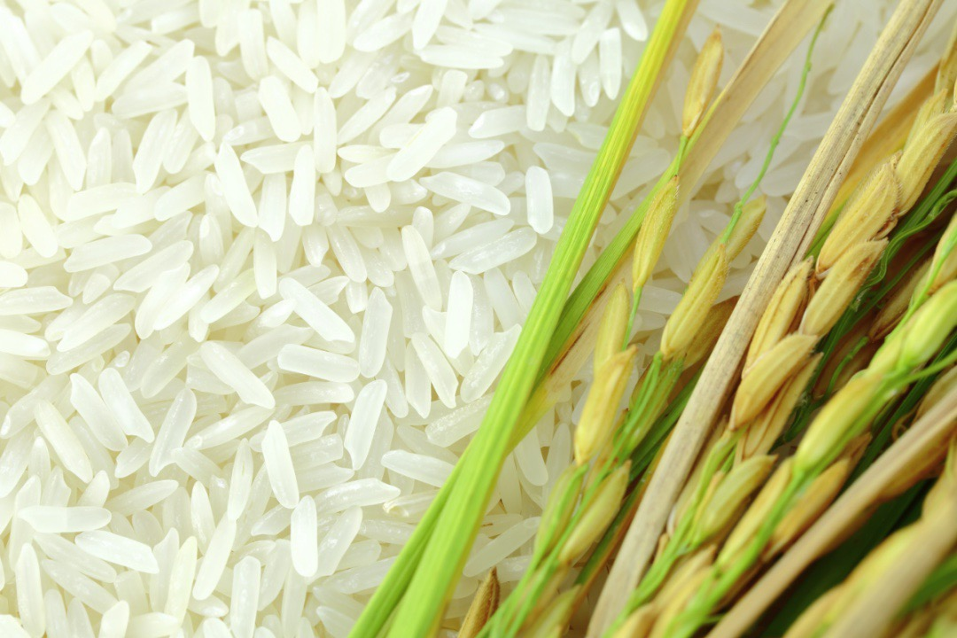 Nghị quyết 128 giải quyết nút thắt thiếu lao động, thúc đẩy xuất khẩu gạo