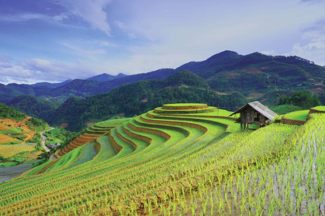 Sản xuất lúa gạo của Hàn quốc phục hồi